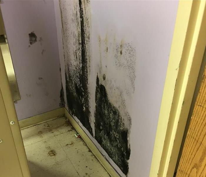 Commercial Mold on Drywall